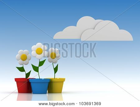 Daisy In Colorful Flowerpot