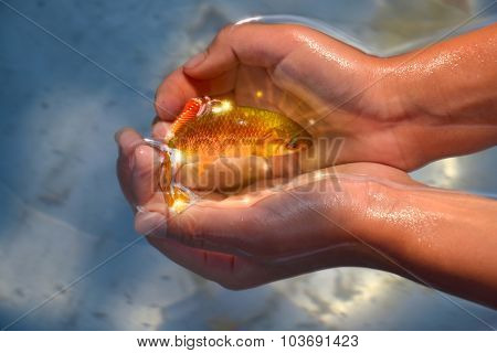 Goldfish In Hands