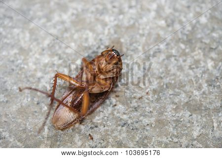 Cockroach Eaten By Ants Close Up