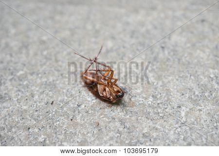 Cockroach Eaten By Ants