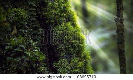 Rainforest close up