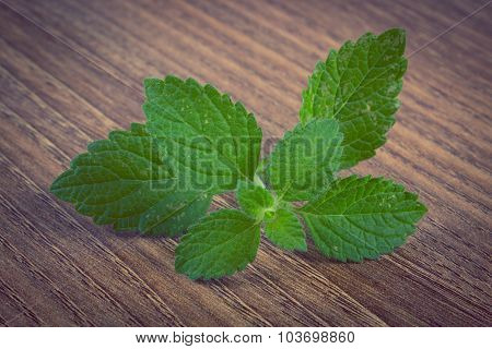 Vintage Photo, Fresh Healthy Lemon Balm On Wooden Table, Herbalism