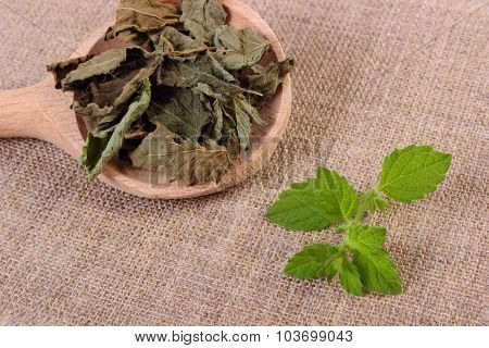 Fresh And Dried Lemon Balm With Spoon On Jute Canvas, Herbalism