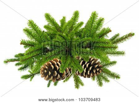 Branch Of Green Christmas Tree With Cones Isolated On White