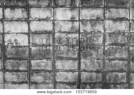 Closeup Of Black Ant White Block Wall