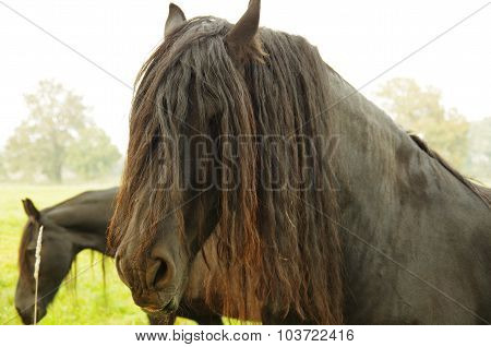 horse with a mane