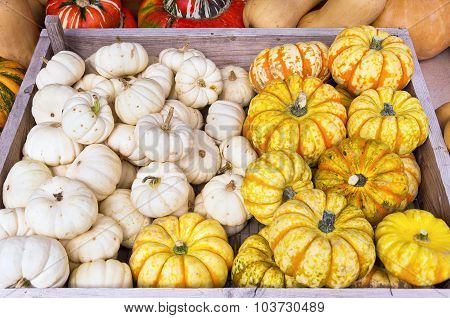 Squashes Mix
