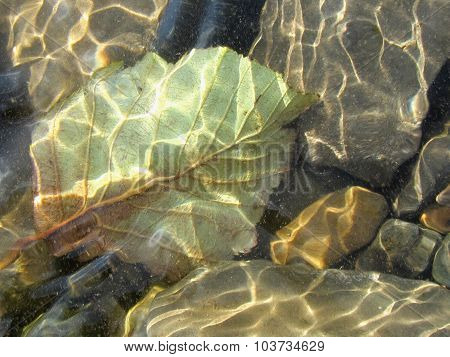 Stones And Leaf Under Transparent Water.