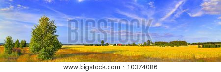 Panoramic Rural Landscape With Birch And Picturesque Sky