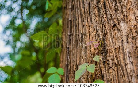 Plant Climbing Up A Tree Trunk