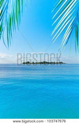 Heaven Landscape Palm