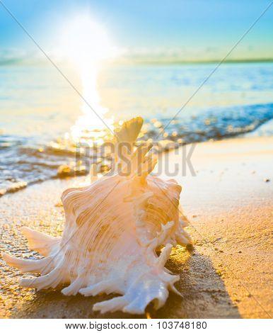 Sunset View Seascape Divine