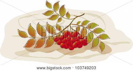 Red rowan on a background of tree. EPS10 vector illustration
