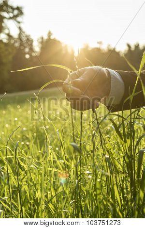 Man Holding Blades Of Fresh Green Grass