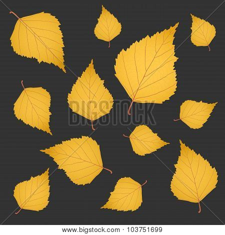 Autumn Background Of Yellow Gold Birch Leaves On Grey