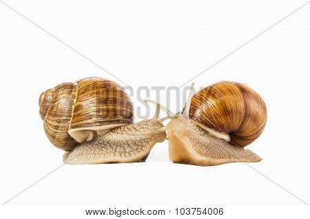 Two Snails Drawn Isolated On A White Background.