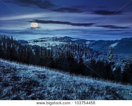 Coniferous Forest In Romaninan Mountain  At Night