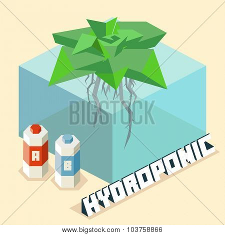 hydroponic farming system. Isometric vector illustration