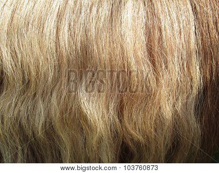 Close Up Of Horse Hair