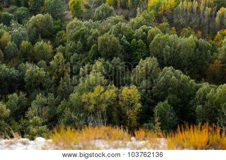 High Altitude Beautiful  Landscape Autumn Larch Tree Forest .