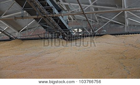 Food Grains Warehouse