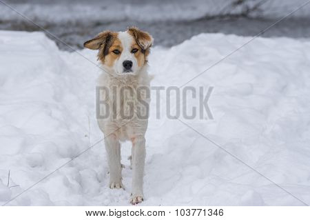 Mixed breed dog guarding the own territory