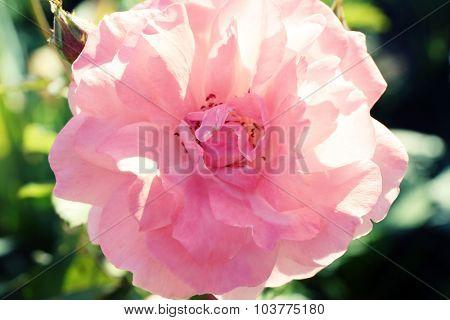 Beautiful flower growing in garden