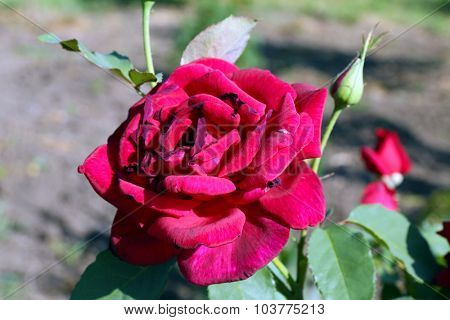Beautiful flowers growing in garden