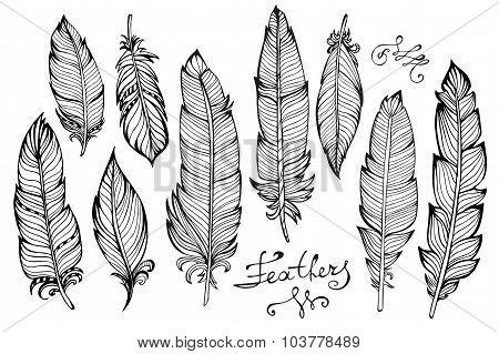 Hand drawn bird feathers  closeup big set isolated on white