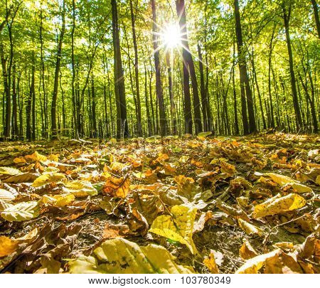 autumn forest trees. nature green wood backgrounds