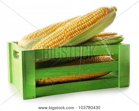 Ripe corn in box isolated on white