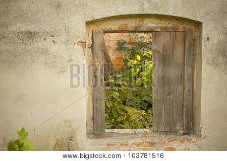 Old Window With Plant