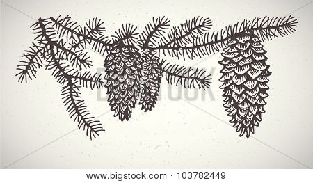 Spruce branches with cones. Graphic element.