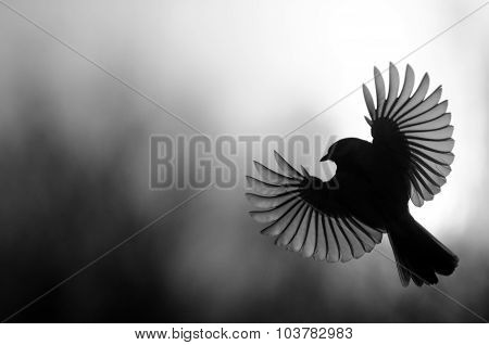 Black And White Silhouette Of The Tit With Open Wings