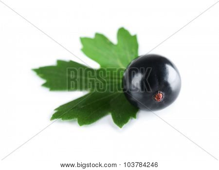 Heap of wild black currant with green leaf isolated on white
