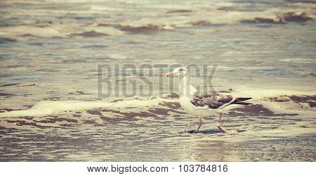 Retro Toned Wading Bird, Panoramic Nature Background.