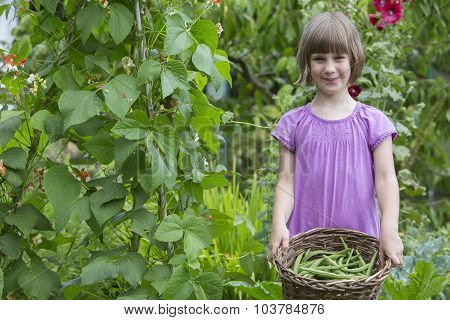 Girl Picking Beans In Vegetable Garden