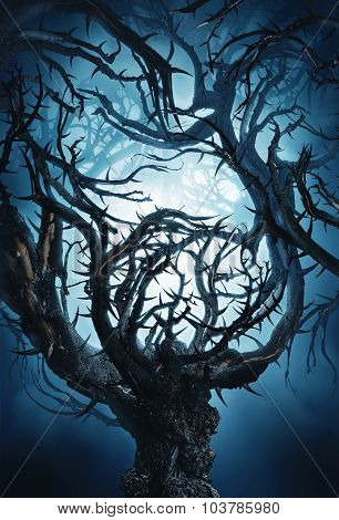 Mystic Tree With Big Thorns At Night