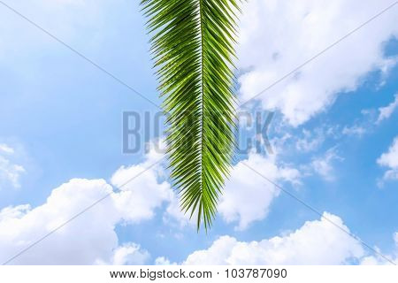 palm tree leaves under blue sky