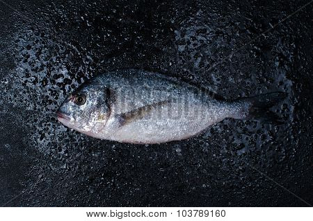 Raw Dorada With Salt On The Dark Table