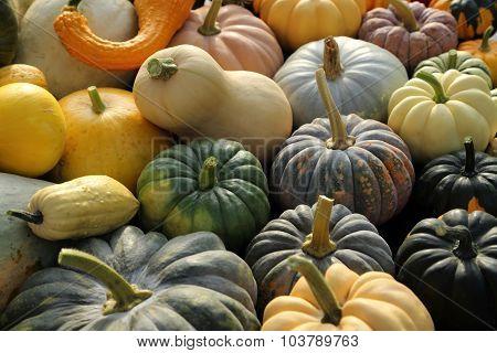 Squash And Pumpkins.