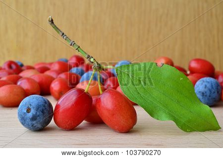 Cornelian And Sloes Close Up
