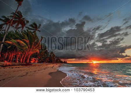 Palm trees along the beach, blue water, pastel coloured sky, during sunset 2