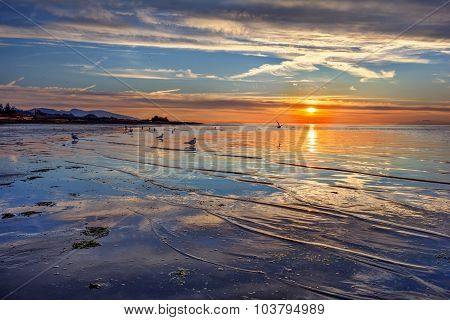 Seagulls walking along the shallow beach and orange sunset on the horizon