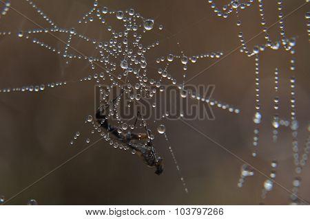 The spider trap.