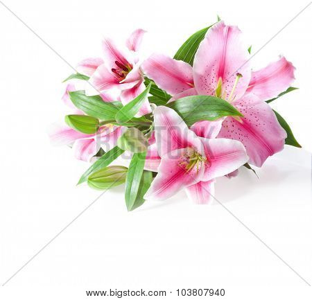 pink lilies bunch on a white background