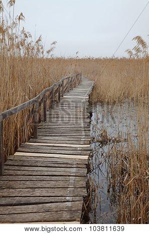 Detail of a swamp wet landscape