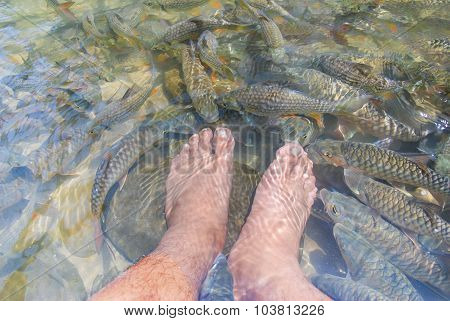 Fish Spa At Natural River.