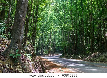 Road Across Mahogany Forest In Bohol, Philippines.