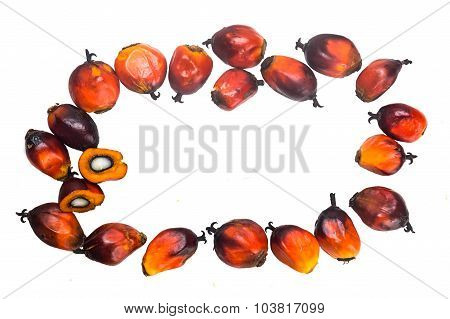 Freshly Harvested Oil Palm Fruits Arranged In Circle On White.